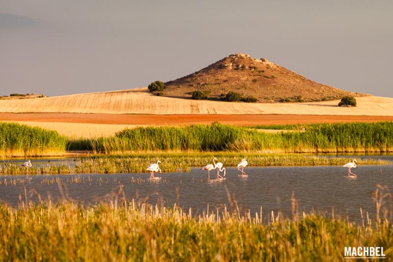 flamencos-en-la-laguna-de-petrola-provincia-de-albacete-lugares-para-visitar-castilla-la-mancha-by-machbel